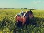 Pferde - Curly Sue