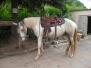 Pferde - Diego