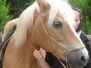 Pferde - Jessy