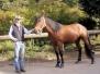Pferde - JJ