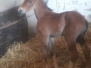 Pferde - John Denver