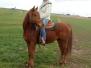 Pferde - Joshy