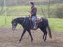 Pferde - Mr. Boogie Jac