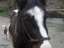Pferde - Yakari